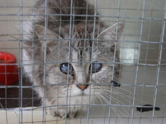 Подмосковные волонтеры обнаружили десятки полумертвых кошек в квартире в Электростали