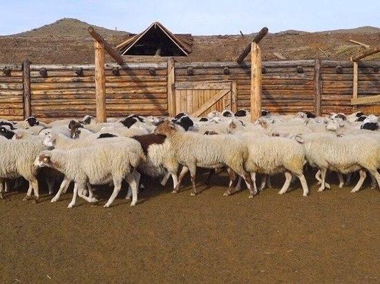 Проект по поддержке молодых животноводов в Туве оказался самым народным