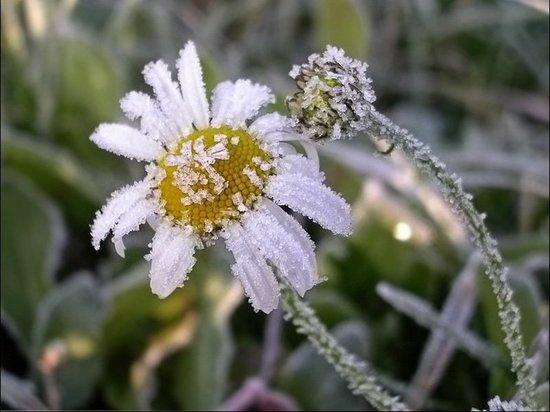 Синоптики спрогнозировали ночные заморозки
