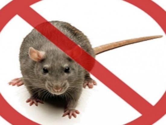 Заболеваемость мышиной лихорадкой в Самарской области выросла в 2,3 раза