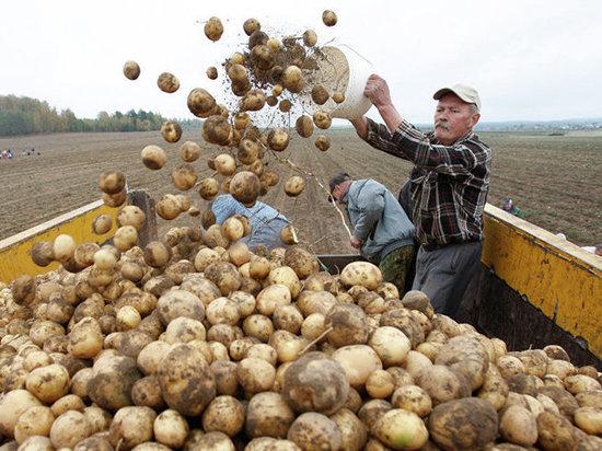 Костромские сельхозкооперативы получат гранты на развитие