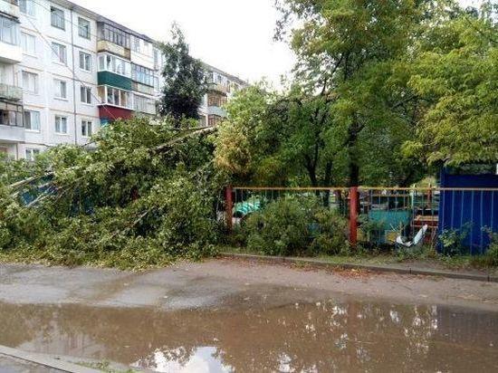 В Самаре на «Калину» рухнуло дерево