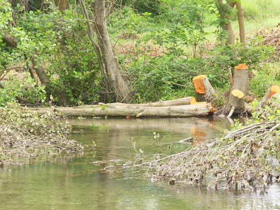 По замыслу заказчика и разработчиков дамба должна спасти село Черноречье от подтопления в случае паводков