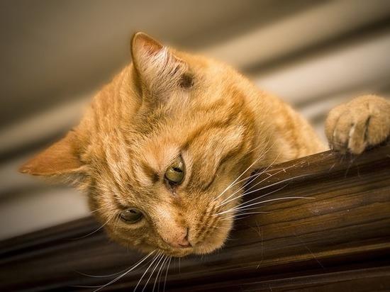 Злостный неплательщик алиментов «погорел» на миллион из-за предательства кота