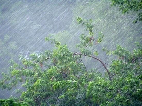 В Чебоксарах шквалистый ветер повалил несколько деревьев