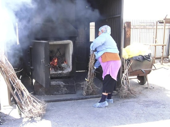 Под Астраханью в печи сожгли саженцы персика с опасным вирусом