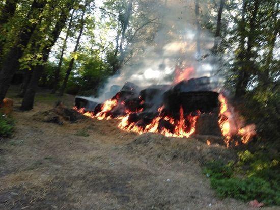 Пожароопасный сезон в Воронеже начался с Центрального парка