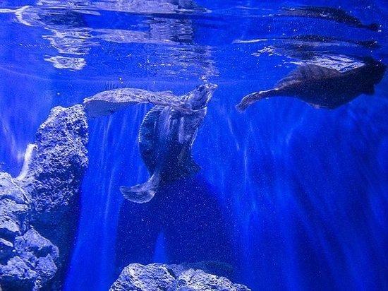 Новые рыбы появились в Приморском океанариуме