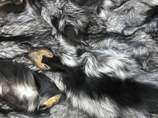 В Петербург не пустили 150 лисьих шкур из Дании