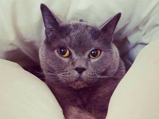 «Отбросили труп в траву»: авиапассажирка ищет виновных в смерти кошки