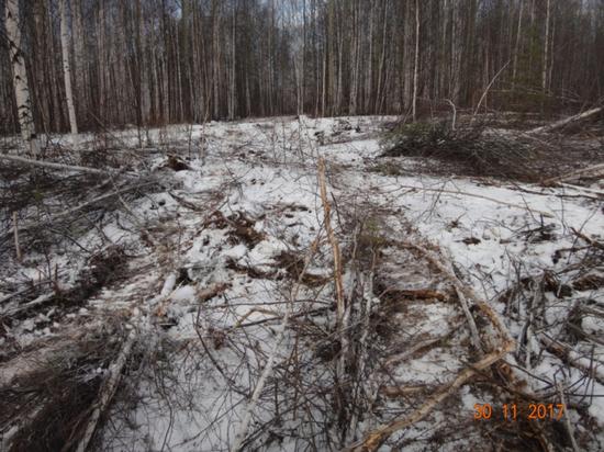Свердловчанин получил срок за то, что сломал несколько деревьев