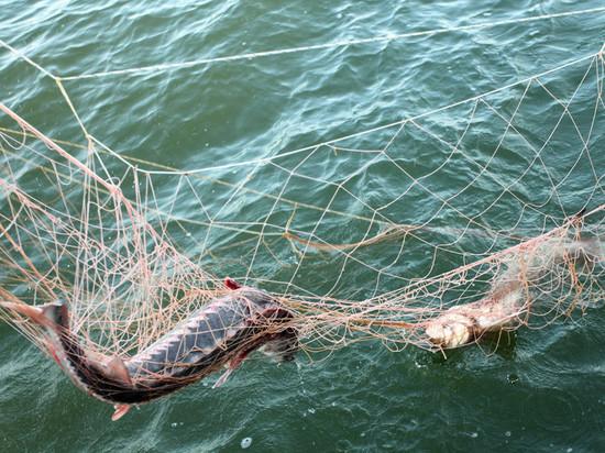 У него было три вентеря рыбных ловушек: в Калмыкии пресекли браконьерство