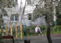 «Твари свисают гроздьями»: нашествие гусениц на Москву вызвало страх