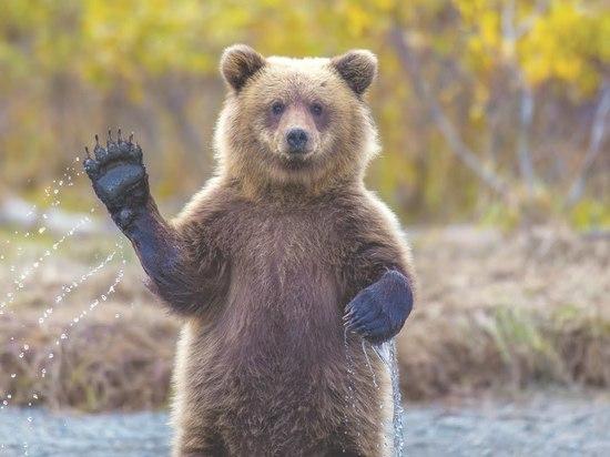По Ульяновску гуляет огромный медведь