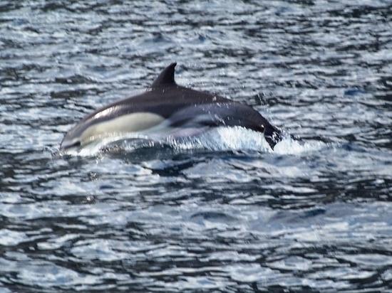 В Крыму дельфинов начнут спасать по регламенту