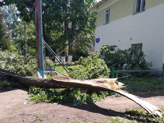 В Саранске на голову девушке упала тяжелая ветка дерева