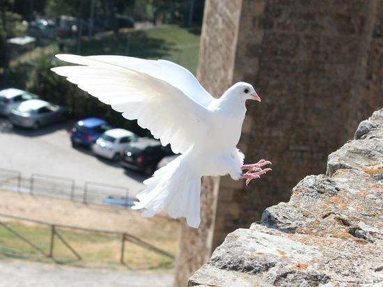 Птичьи воры: из столичной голубятни похищены десятки пернатых