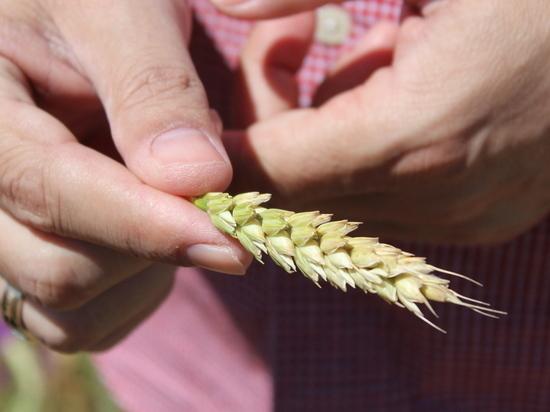 Засуха и цены на ГСМ ударили по аграрному сектору Крыма
