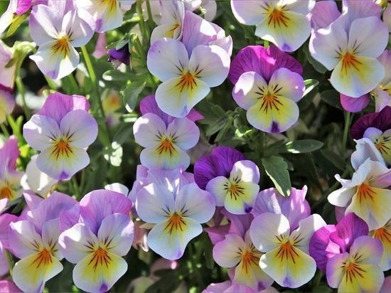 Настроение лета: цветами украсят карельскую столицу к праздникам