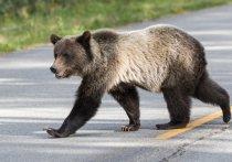 Отправился медведь в город…