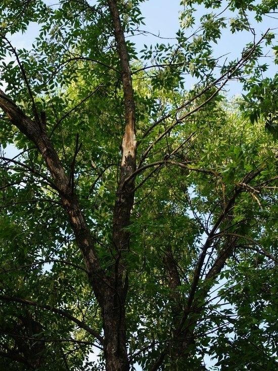 Тамбовчанку убила ветка, упавшая во время урагана