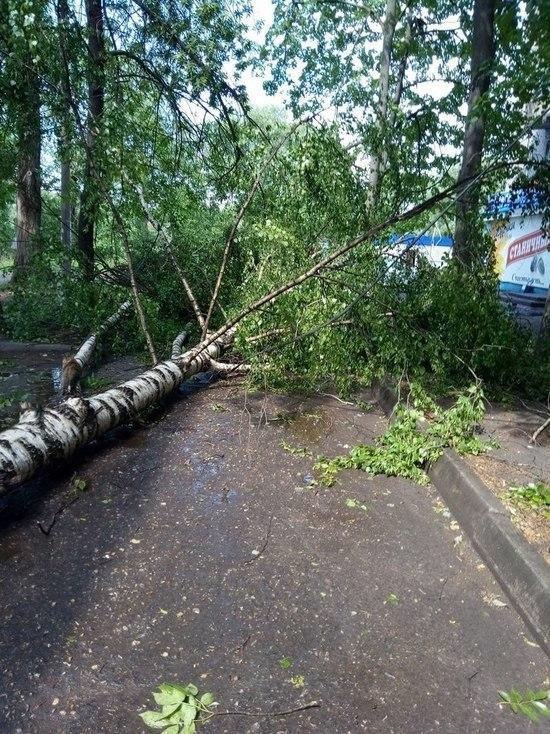 В Тамбове ураганный ветер повалил 16 деревьев