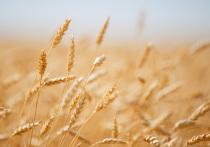 Волгоградские аграрии завершили весенне-полевую кампанию и рассказали о прогнозах