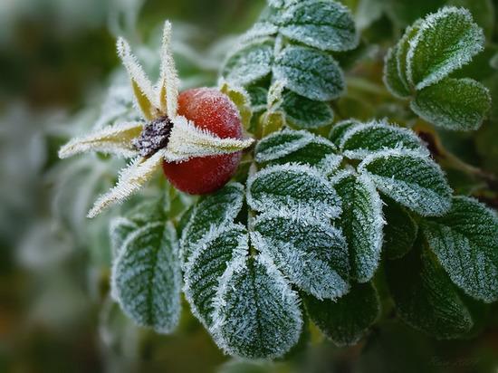 В Ульяновской области ночью ожидаются заморозки до -2 градусов