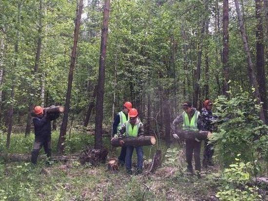 Под Казанью сотрудники лесничеств продолжают разбираться с последствиями урагана, который прошел 30 мая