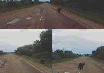 В Талдомском районе к деревне прибился медведь-подросток