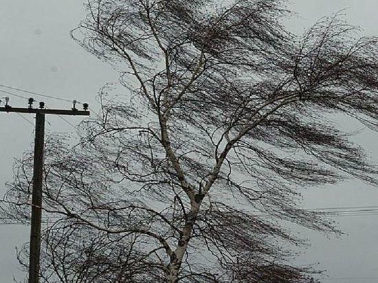 На Мордовию надвигается сильный ветер