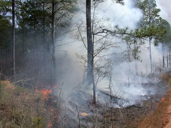 Лесные пожары зафиксированы в Югре