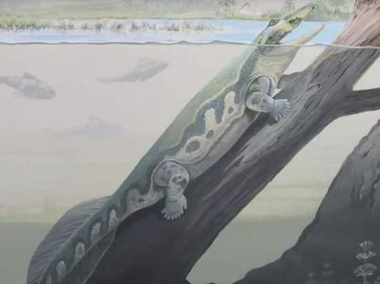 Обнаружено древнейшее четвероногое животное на планете