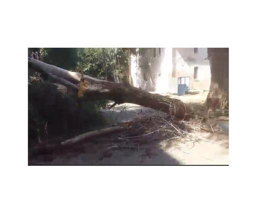 Упавшее в Астрахани дерево лишило мужчину носа