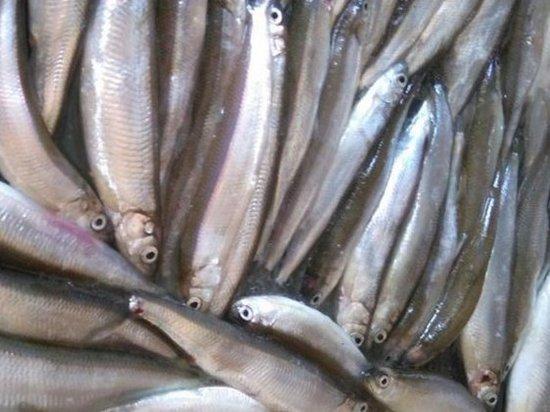 Рыбные отходы аукнулись предпринимателю в Приморье