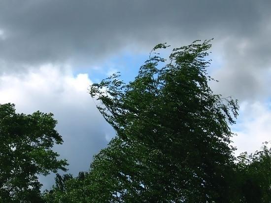 В Самарской области ожидаются сильный ветер и грозы