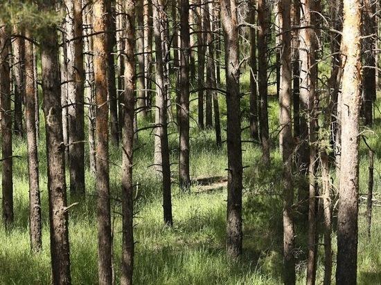 В Волгоградской области высадят 4,5 млн деревьев