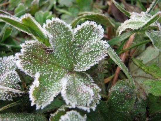 В Оренбуржье в ближайшую ночь возможны заморозки до минус 2 °С, а на почве до минус 3°