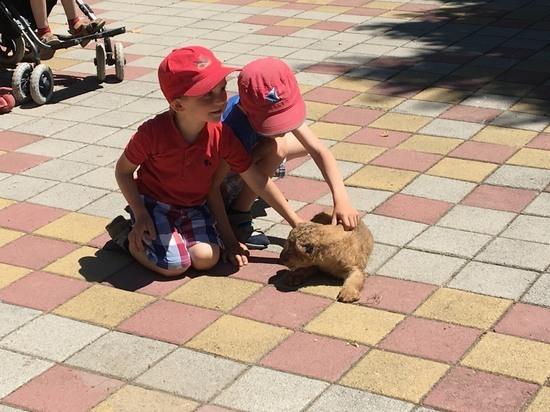 Львица и оленёнок родились в зоопарке Ставрополя