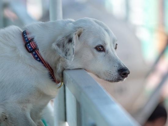 Под Казанью хотят построить еще один приют для бездомных животных