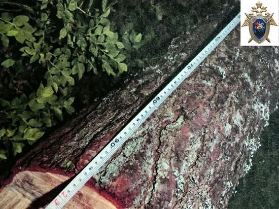 Под Тверью мужчину насмерть придавило деревом