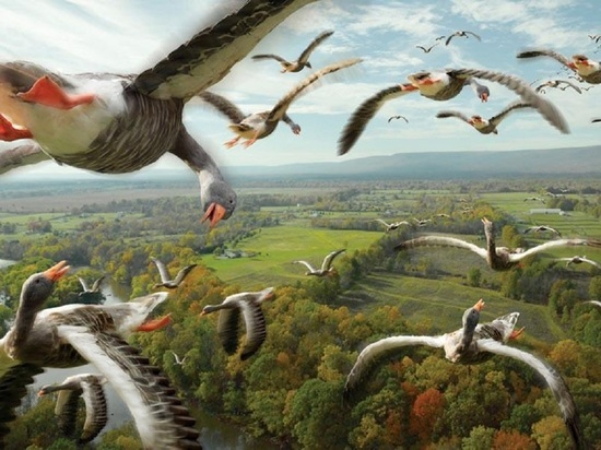 Национальный парк «Онежское Поморье» намерен развивать любительскую орнитологию