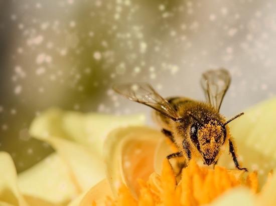 Пчелы оказались умнее, чем люди времен Средневековья