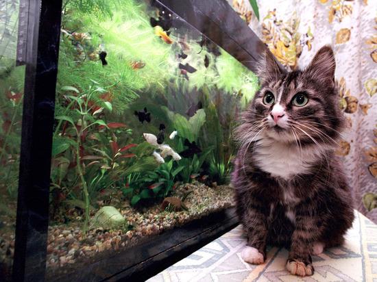 Россиян предложили обязать маркировать кошек и собак за свой счет