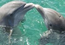 Крыму нужен регламент по спасению выбросившихся дельфинов – ученые