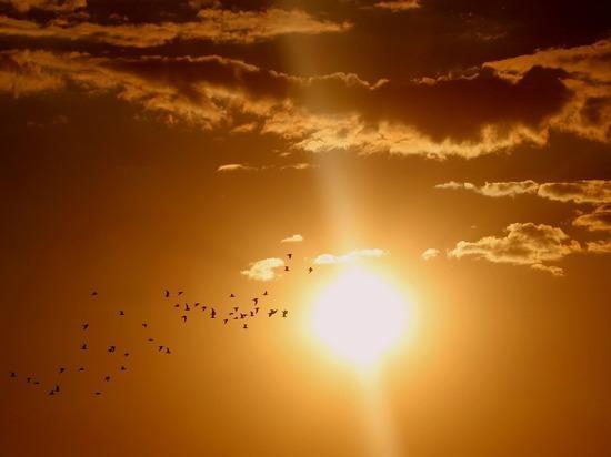 До +27°C: прогноз погоды в Алтайском крае на День России