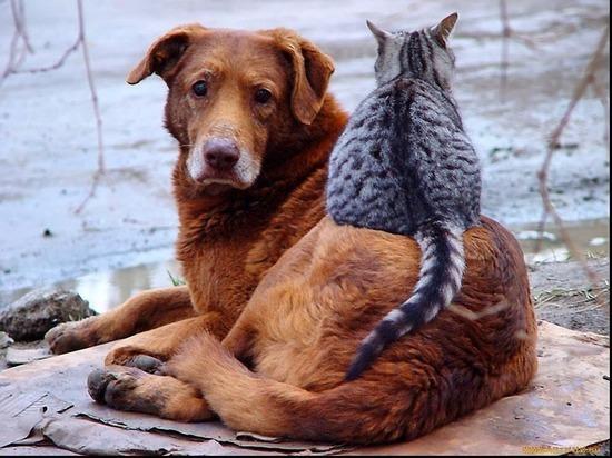 В Оренбурге ищут ловцов бродячих кошек и собак за полмиллиона рублей