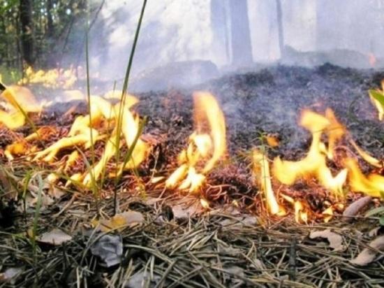 До семи возросло число районов Калужской области с высокой пожарной опасностью