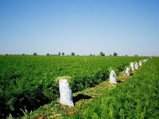 Эксперт: «Женщины лучше мужчин работают на плантациях»
