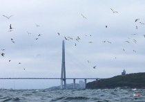 Еще один мост построят во Владивостоке